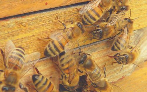 rent to relatives and bees